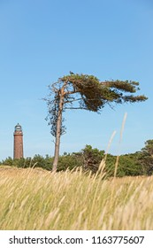 The Natureum at Darss with its lighthouse