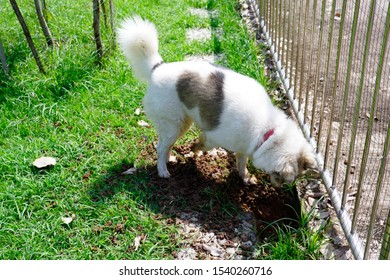 naughty dog is digging a hole in the ground on field.