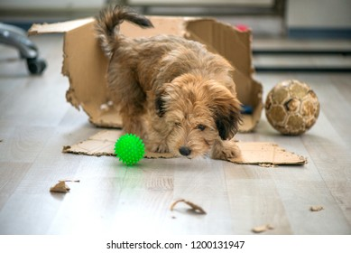 Naughty dog left home alone, sitting in the middle of mess on the floor. Disobedient dog with bad behavior. Puppy chews everything while teeth are growing