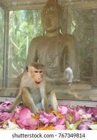 a naughty monkey sitting in front of the sitting Buddha statue