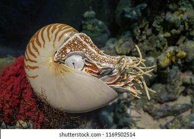 Nautilus in Georgia