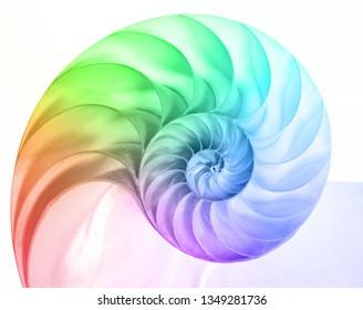Nautilus Pompilius in colors of the rainbow