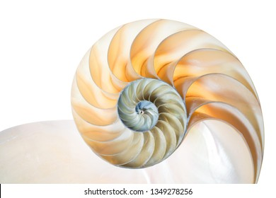 Nautilus Pompilius in colours of the rainbow