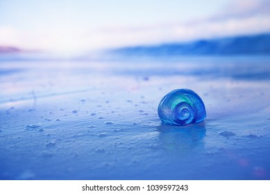 nautilus sea shell on golden sand beach with waves in  delicate blue sunrise ight, shallow dof