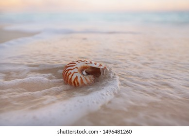 nautilus sea shell on golden sand beach with waves and seascape in the sunset light, shallow dof