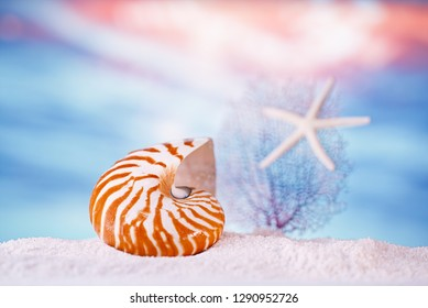 nautilus seashell sea shell  with tropical ocean underwater seascape