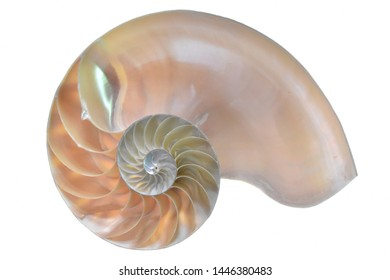 Nautilus shell of beautiful sea creature