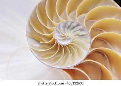 nautilus shell cross section symmetry spiral Fibonacci sequence half slice natural pattern structure growth golden ratio (nautilus pompilius) seashell mollusk pearl stock, photo, photograph, image,