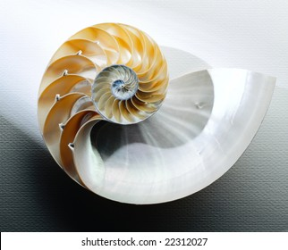 Nautilus Shell cut in half on white with shadow
