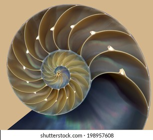 Nautilus shell pattern