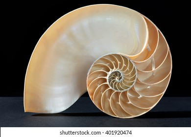 Nautilus shell, perfect Fibonacci pattern on black, clipping path included
