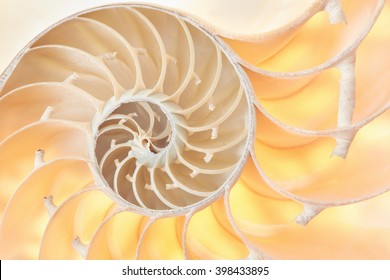 Nautilus shell section, perfect Fibonacci pattern background