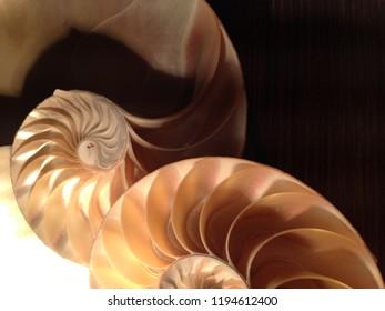 nautilus shell symmetry cross section spiral structure Fibonacci growth golden ratio background mollusk (nautilus pompilius) copy space half split pearl