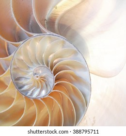 nautilus shell symmetry cross section spiral Fibonacci sequence structure growth golden ratio close up seashell half slice pompilius stock, photo, photograph, image, picture