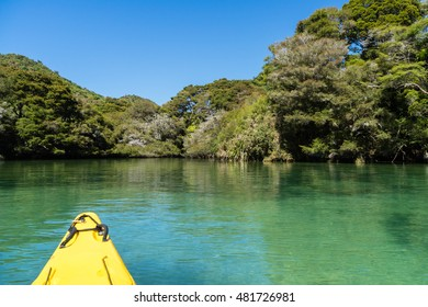Navigating a mangrove tree lined river in New Zealand.