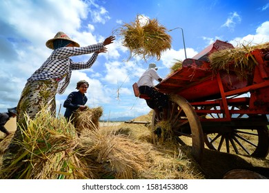 Naypyidaw City, Myanmar, 2015 : after harvest the rice, local farmer collecting the straw for their life stock eating. Nowadays, Naypyidaw is the official capital city of Myanmar.