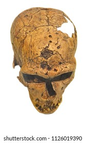 Neanderthal Skull as seen from above. Isolated against a white background