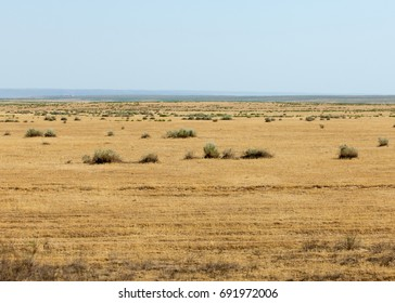 near desert. desert. steppe. Summer in the steppe.