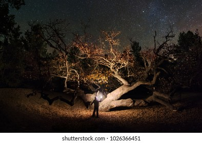 Near the great oak under the stars