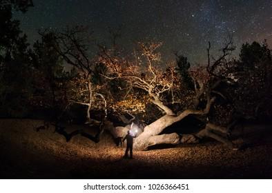Near the great oak under the stars