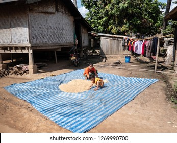 near pakbeng, laos - november 18, 2018: rice is being dried