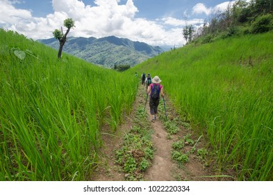 NEAR PHONGSALY, LAOS - AUGUST, 2017 : Hiker crossing rice paddy in North of Laos.