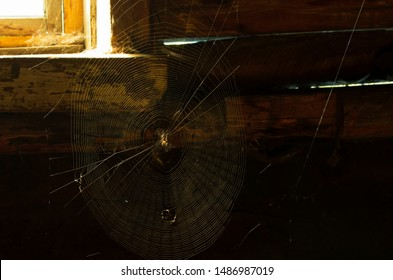 Near the rural window with daylight in a dark room stretched web and it sits a home spider