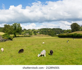 Near Sawrey countryside view by Hawkshead Lake District former village home to Beatrix Potter