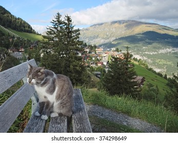 Near the Swiss City of Murren in the Bernese Alps, a nice cat is sitting on a bench after eating food some tourists have left underneath the bench.