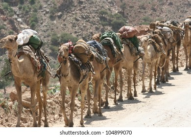 Near the village of Berhaile in Ethiopia a caravan of camels hauls supplies  to workmen cutting salt in the desert