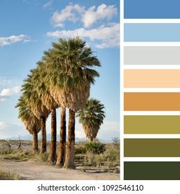 A neat row of palm trees in the Nevada desert, USA, in a colour palette with complimentary colour swatches.