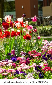 Neatly arranged flower bed of white, red and pink tulips in park along street in bright sun