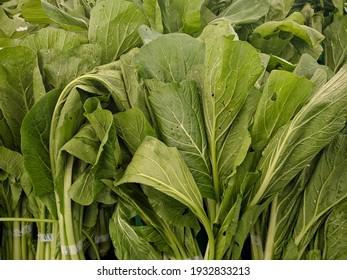 neatly arranged fresh green mustard greens