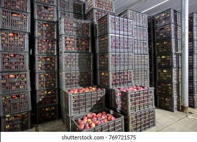 Neatly arranged fruit basket, fruit warehouse, North China