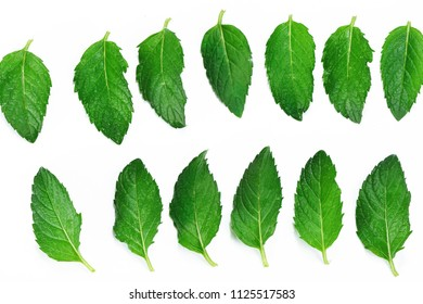 Neatly arranged mint leaves