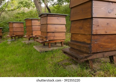 Nebo, Caernarfon, Wales, UK - July 23, 2015: An arc of four wooden WBC William Broughton Carr beehives in a shaded garden. Bees can be seen on arriving and leaving the front hive from the entrance.
