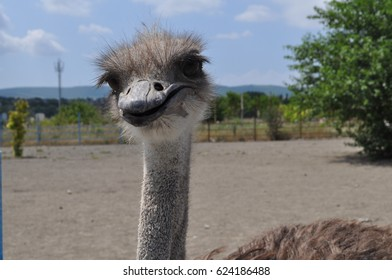 Neck of the ostrich