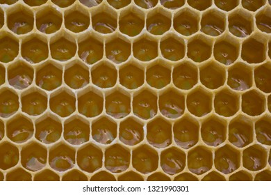Nectar filled the new honeycombs. The light reflected from its surface gives a glare in the form of spectra.