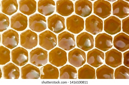 Nectar and honey in new comb. Bees nectar poured into new comb to convert it into honey