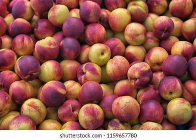 Nectarines (Prunus persica var. nectarina), smooth peel peach, pile in the market, beckground