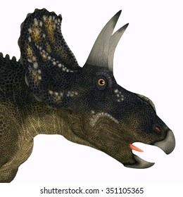 Nedoceratops Dinosaur Head - Diceratops is a herbivorous ceratopsian dinosaur that lived in the Cretaceous Period of Wyoming, North America.