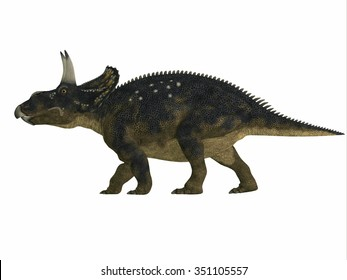 Nedoceratops Side Profile - Diceratops is a herbivorous ceratopsian dinosaur that lived in the Cretaceous Period of Wyoming, North America.