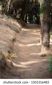 Needle covered trail through pine trees near Refugio Del Pilar in La Palma, Spain with focus on foreground.