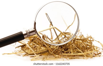Needle in  haystack on background