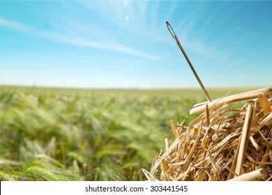 Needle in a Haystack, Searching, Haystack.