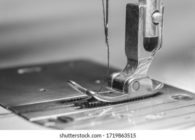 Needle presser foot with black thread of industrial sewing machine for sew cloth and black and white tone (monochrome) with copy space close-up.