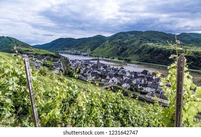 Neef at the Moselle Rhineland-Palatinate Germany.