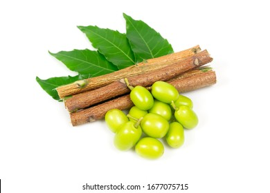 Neem fruit with neem sticks and neem leaf isolated on white background. Neem is an excellent moisturizing and contains various compounds that have insecticidal and medicinal properties.