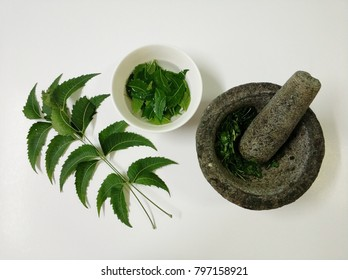neem leaf well known as daun semambu in malaysia. Remedy for skin itchy and chicken pox
