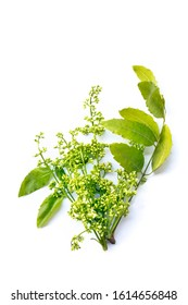 Neem leaves used as ayurvedic medicine with ground paste over white background
